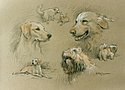 Our three dogs by Barrie Linklater